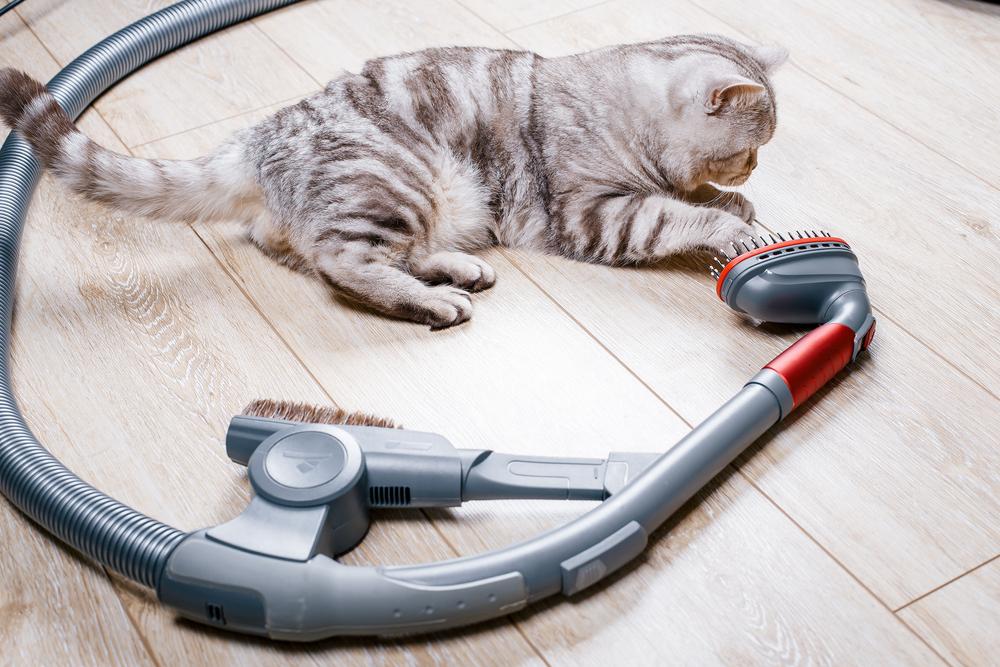 kot, odkurzacz, sprzątanie