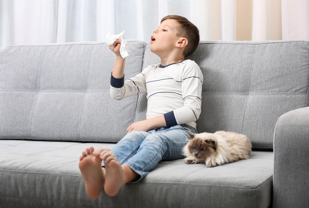 alergia na sierść, kot, sierść,