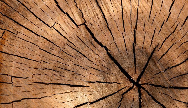 drzewo, drewno, pixabay, biżuteria z drewna,